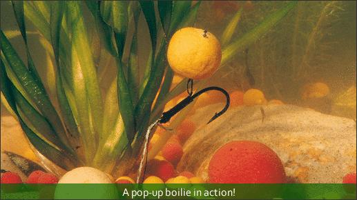 pop up boilies