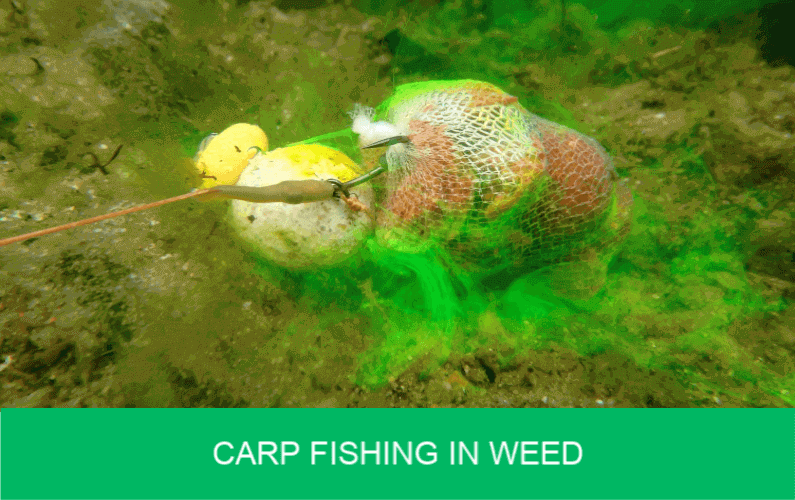 carp fishing in weed