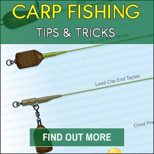 Carp Fishing Tips 2018