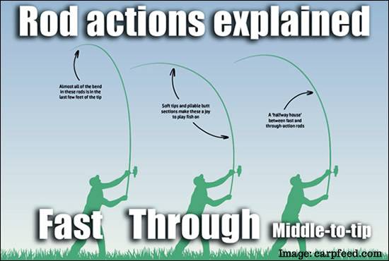 Carp Rod Actions