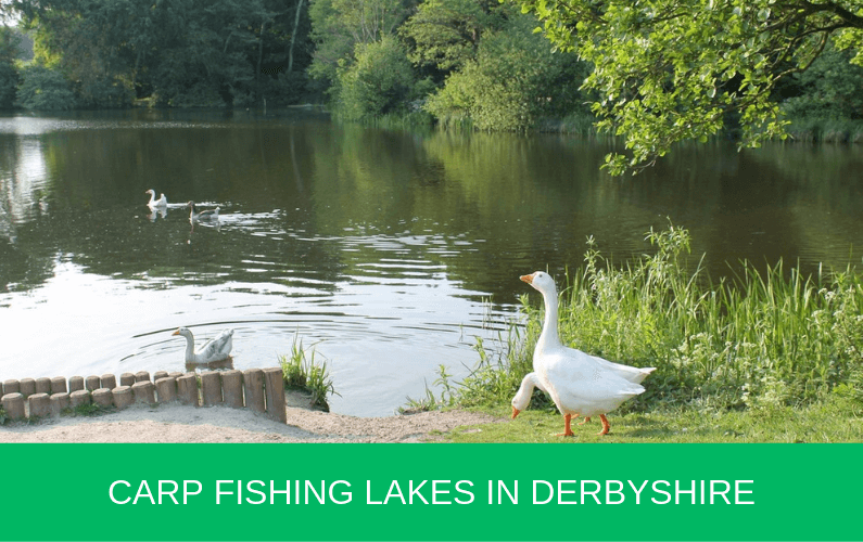 Carp Fishing Lakes in Derbyshire