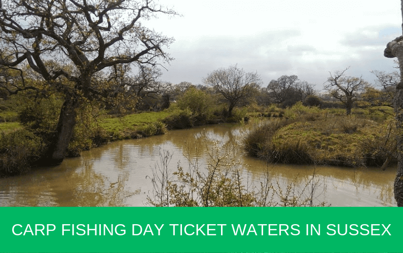 Carp Fishing Day Ticket Waters in Sussex