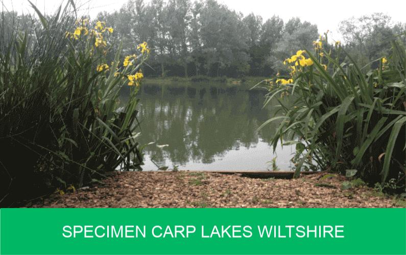 Specimen Carp Lakes Wiltshire