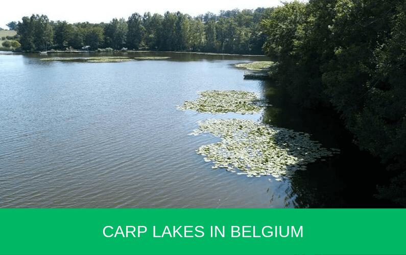 carp lakes in belgium