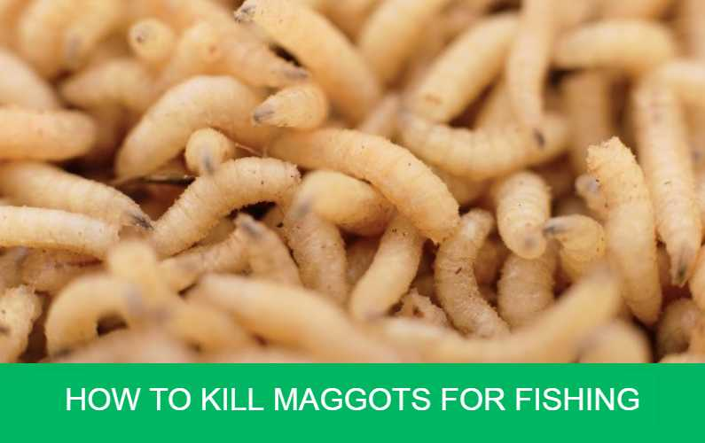 How to Kill Maggots for Fishing